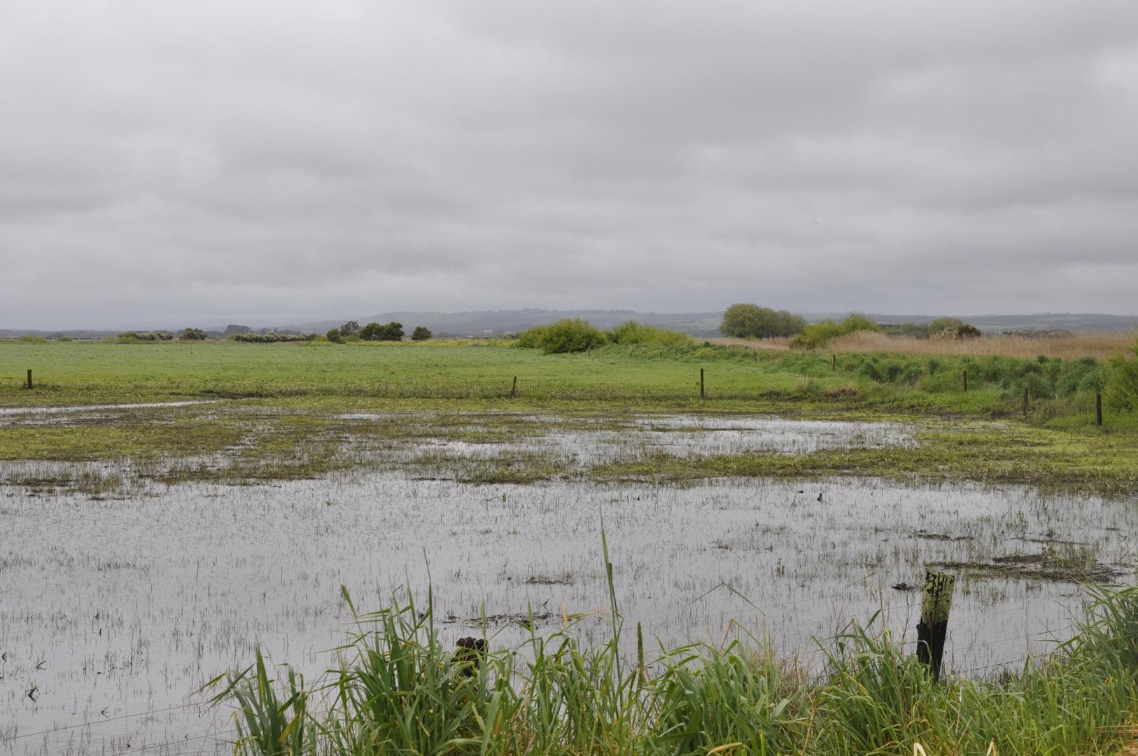 Ladyswamp